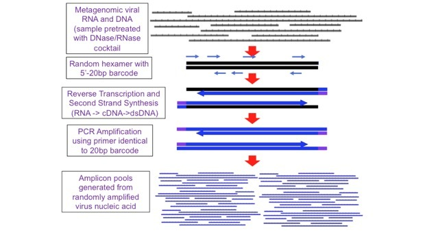 Metagenomic Sequencing for Virus Discovery and Characterization