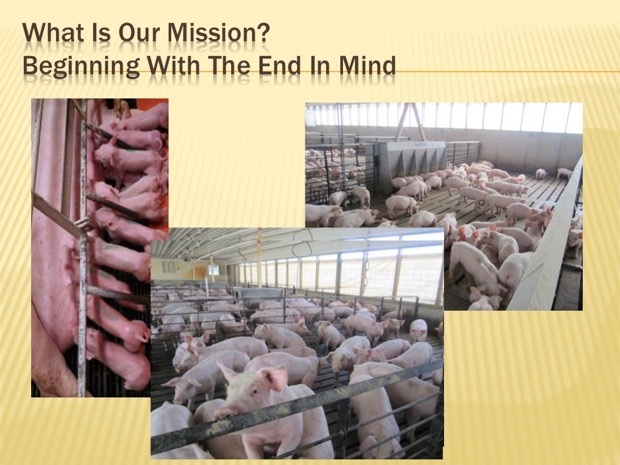 Keys to Positively Impact Pig Performance and Care