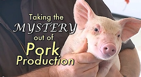 Taking mystery out of pork production