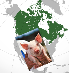 Canadian Pork